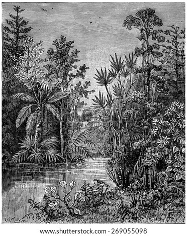Plant landscape of the Cretaceous period, Bohemia, vintage engraved illustration. Earth before man 1886. - stock photo