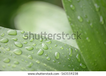 Plant leaf with water drops - stock photo