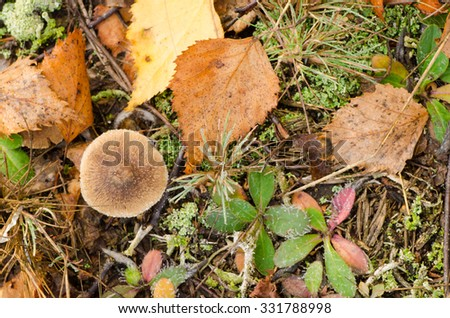 plant litter in fall forest