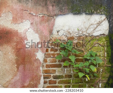 Plant little tree on old red bricks wall background - stock photo