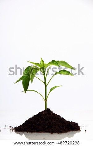 Plant on a white backdrop