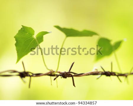 Plant on barbed wire - stock photo