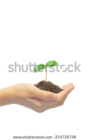 Plant on hand