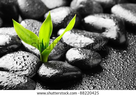 plant on the stones with dew - stock photo