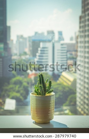 plant on window in office - stock photo