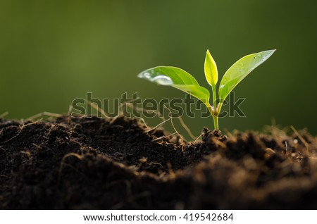 Plant, Plant seeding,Close up Young plant growing with rain water drop over green and morning sunlight environment