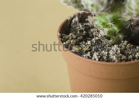 Plant pot with a green cactus and a yellowish background close up