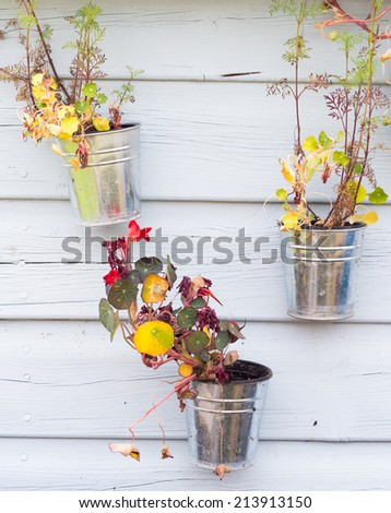 Plant pots on wooden background - stock photo