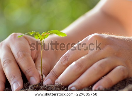 Plant,Sapling,Tree, Male hand planting young tree - stock photo