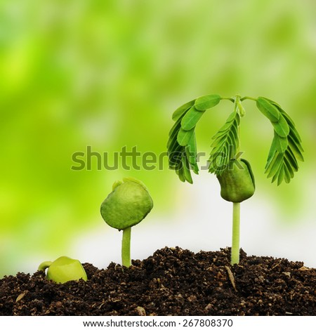 plant seedling - stock photo