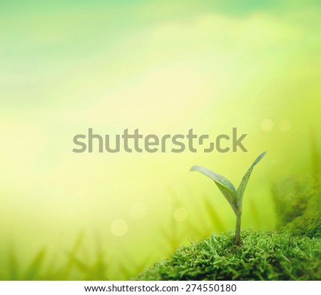 Plant seedling. Garden background with small seedling. Spring garden. - stock photo