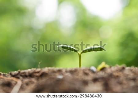 plant seedling growing on fertile soil / baby plant begins new life - stock photo