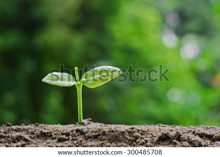 plant seedling growing on fertile soil / baby plant begins new life - stock photo