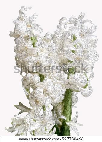 Plant spring white flower hyacinth name cheerful stock illustration plant spring white flower hyacinthname as cheerful harbinger of spring with its bright mightylinksfo
