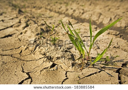 Plant struggling for life at drought land - stock photo