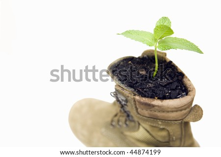 Plant surviving in a boot - stock photo