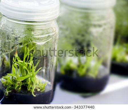 Plant tissue culture images hd
