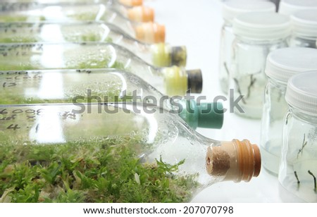 plant tissue culture bottle,orchid, plant tissue culture in the laboratory ,Laboratory ecology plant technology, green environment and agriculture technology, food