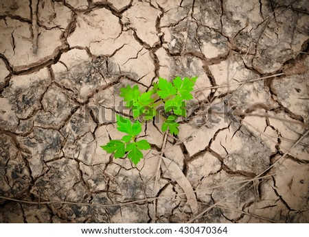 plant tree growing seedling in soil, young plant. small plant, Young green plant. plant tree growing - stock photo