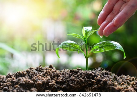 plant tree growth up for concept business and fiance