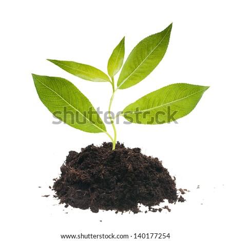 Plant tree in ground. - stock photo
