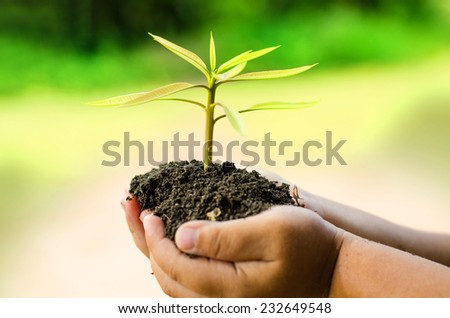 Plant, Tree, Sprout growing on child's hand over grass green background - stock photo