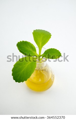 Plant with root inside test tube - stock photo