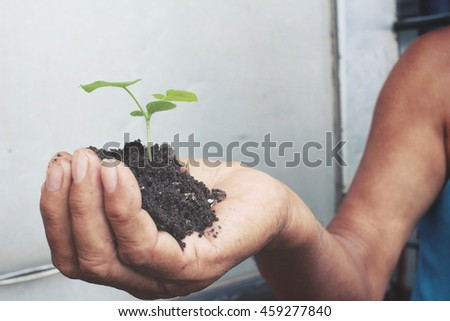 Plant with soil on hand