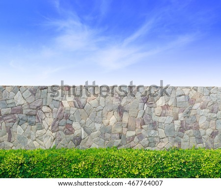 Plant with stone wall and blue sky.
