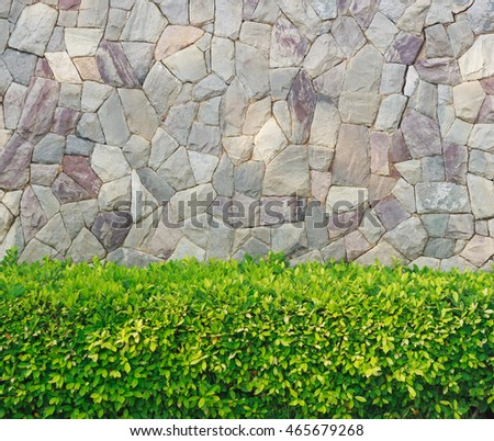 Plant with stone wall garden decorative.