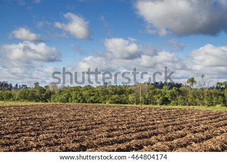 Plantation field, trees and blue sky with clouds