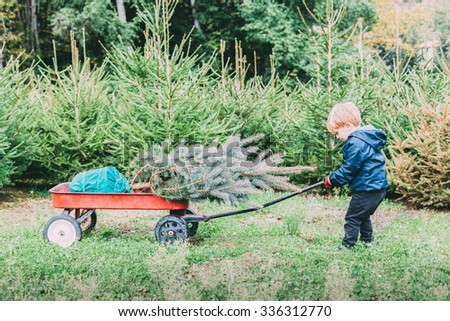 Plantation of fir trees for Christmas. A blond child drags her cart containing the Christmas tree that has chosen to take home for decorates for the holiday season - stock photo