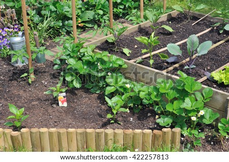 plantation of seedlings in a vegetable patch