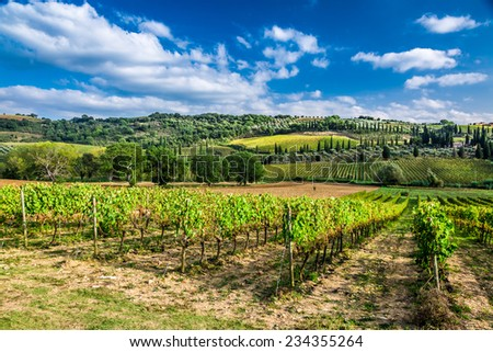 Plantation of vines near Montalcino in Tuscany - stock photo