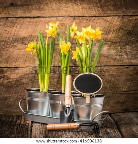 Planter of beautiful daffodils with a blank chalk board sign. - stock photo
