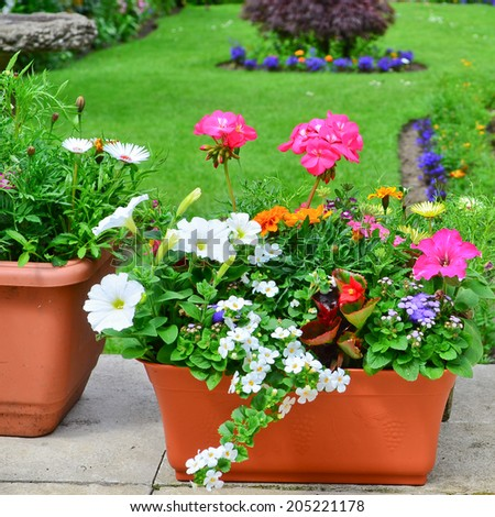 Planters on the patio - stock photo