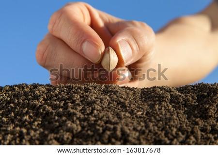 planting - stock photo