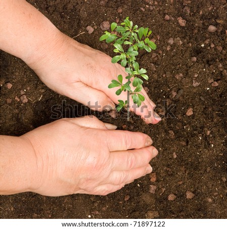 Planting a bush - stock photo