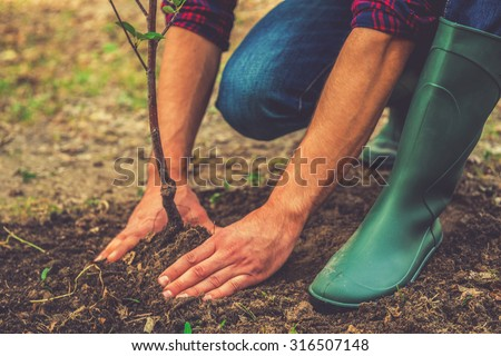 Planting a tree. Close-up on young man planting the tree while working in the garden - stock photo
