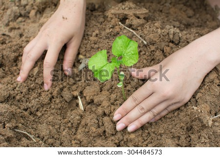 planting a tree New life.