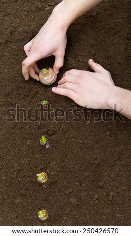 Planting Bulbs in the soil - stock photo