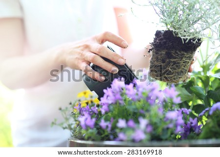 Planting flower garden. Female plants in pot plants forming a beautiful composition flower - stock photo