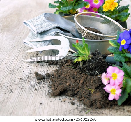 planting flowers - stock photo