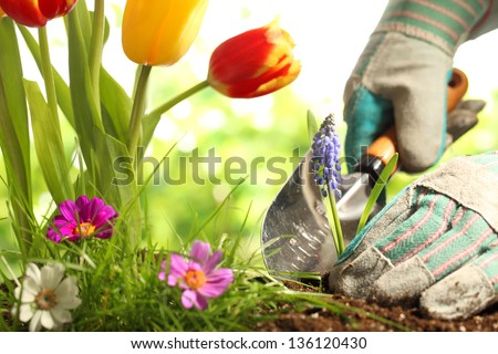 Planting Flowers in a garden - stock photo