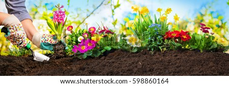 Planting flowers in sunny garden