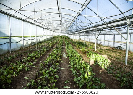 Planting flowers in the greenhouse - stock photo
