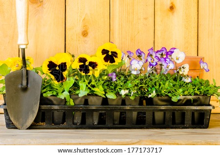 Planting garden with violas, pansies, cultivator, and pots on wood background.