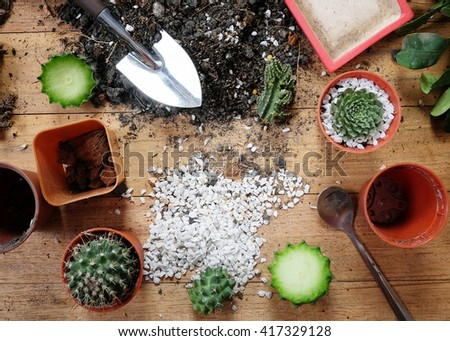 planting Green cactus and succulent plants on wood background,Gardening concept. - stock photo