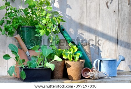 planting in peat pots and tools on wooden garden worktop - stock photo