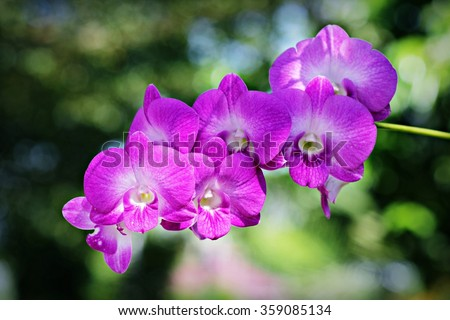 Planting large trees inserted with beautiful purple orchid.